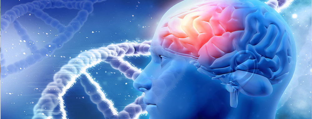 dna and the human brain